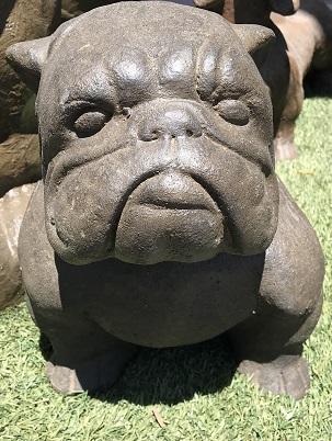 Dogs: Bulldog (Small)