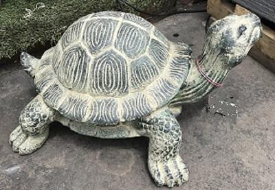 Turtle: Green Turtle (Small )
